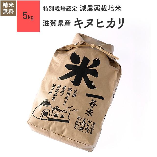 特別栽培米 滋賀県産 キヌヒカリ 5kg 令和元年産