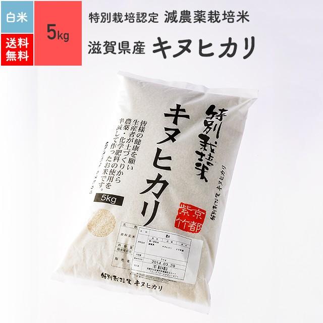 特別栽培米 滋賀県産 キヌヒカリ 5kg 精米 令和元年産