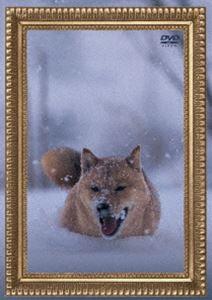 電気グルーヴ/レオナルド犬プリオ(通常盤) [DVD]